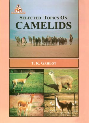 Selected Topics on Camelids